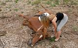 accident horse