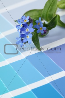 Forget-me-nots on color swatch