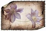 vintage background image with flowers.