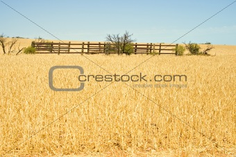 corral in a field of wheat