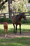 was that you? horse and foal