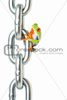 frog pondering on how to get back down