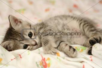 Grey kitten kitten lays on a bed
