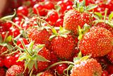 Red currant & strawberry in basket