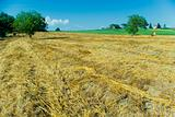 Harvest Fields With Straw in tuscany
