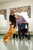 Elderly woman petting dog with middle-aged daughter.