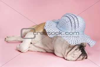 Sleeping English Bulldog wearing bonnet.