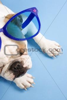 Sleeping English Bulldog wearing oversized blue sunglasses.