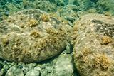 Underwater view of rocks in Maui, Hawaii.