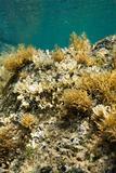 Underwater view of marine vegetation in Maui, Hawaii.