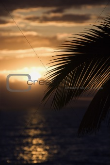 Palm leaf against sunset in Maui, Hawaii.