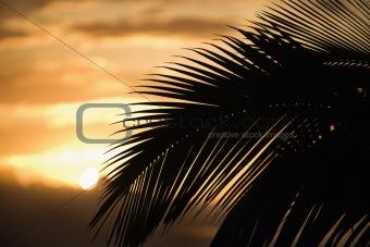 Palm leaf against sunset in Maui, Hawaii.