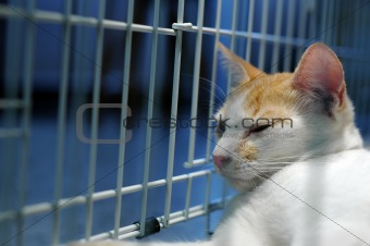 Kitty in cage