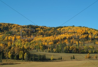 Fall colors in the Alberta foothills