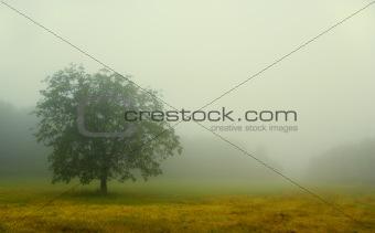 Fog in chianti