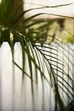 Palm leaf over fence on Bald Head Island, North Carolina.