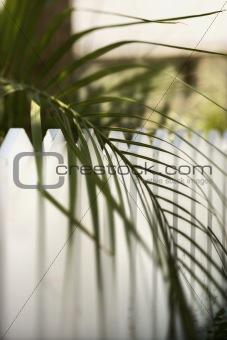 Palm leaf over fence on Bald Head Island, North Carolina.