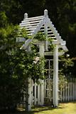 Arbor with rose bush and white picket fence.