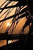 Palm against sunset Lighthouse on Bald Head Island, North Caroli