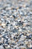 Mixed and broken sea shells.