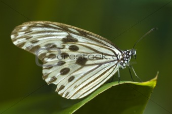 butterfly with natural background