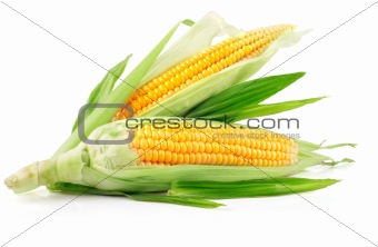 fresh corn fruits with green leaves