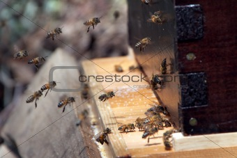 Hive Arrival