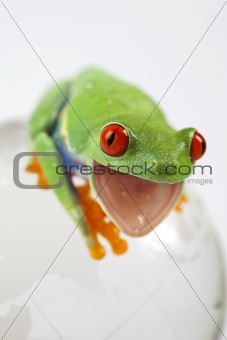 Green frog on globe