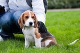 Dog and human on green grass