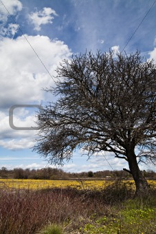 Old tree closeup