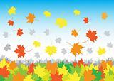 falling_maple_leaves_in_heap