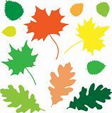 Leaves_basic