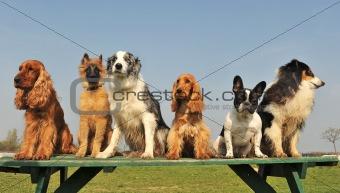 five little dogs