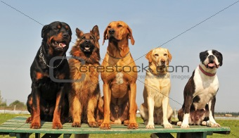 five big dogs