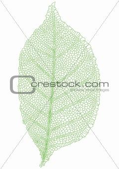 green leaf, vector