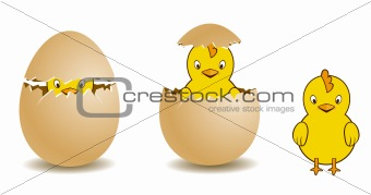 chicken and eggshell