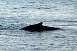 Wale Back