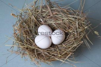 three eggs lies at hay