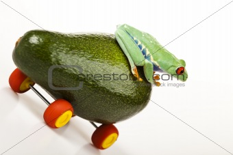 Frog and car