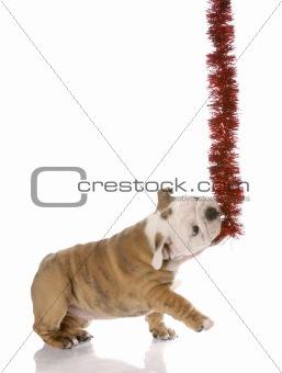 naughty little christmas helper - english bulldog