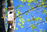bird house and young spring  leaves