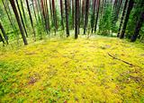 Mossy meadow