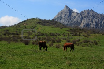 Grazing horses. Photo 9330