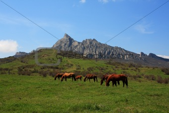 Grazing horses. Photo 9335