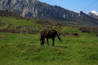 Grazing horses. Photo 9339