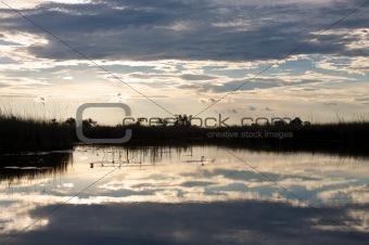 Okavango delta in botswana - Moremi Reserve