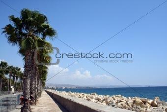 Cyprus coastline and palm trees