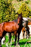 stallion with horses