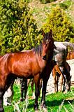 stallion with horses