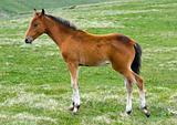 Foal in grassland